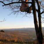 На дереве